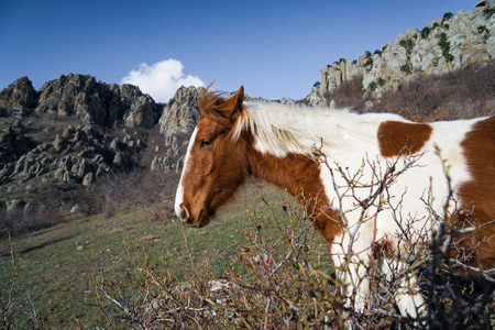 A horse is grazing in the mountains. Mountain range Demerdzhi, the Republic of Crimea. Stock Photo