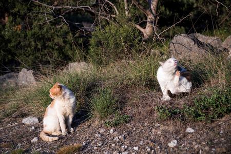 Foros, Republic of Crimea - April 1, 2019: Peninsula Foto de archivo