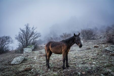 Horse grazing in the fog in the mountains Demerdzhi in the Valley of ghosts