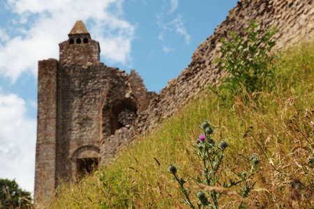 thistle plant: Una pianta di cardo con le rovine del castello in background; molto basse profondit� di campo.