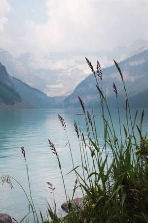 Lake Louise with plant in foreground