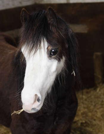 Horse eating hay Stock Photo - 8874093