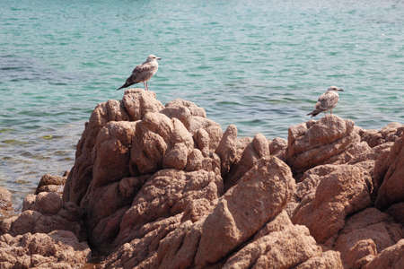 2 young seagulls sitting on rocks in front of the sea  Stock Photo