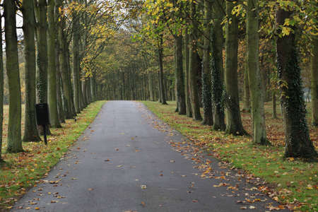 A road lined with trees Stock Photo