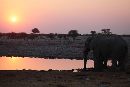 Two elephants at a watering hole as the sun goes down