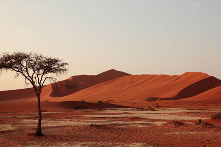 A solitary tree in the Namibian desert