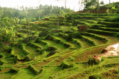terraced: Beauty nature rice terraces in mountain