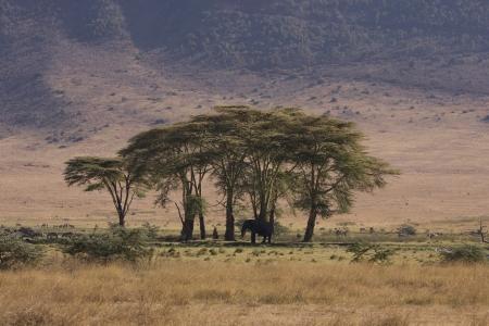 Elephant in Ngorongoro National Park Tanzania Africa Standard-Bild