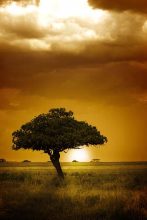 the national flag of kenya: África Sunset