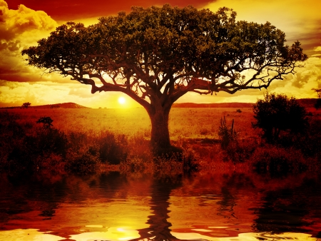 Africa Sunset Stock Photo - 17971584