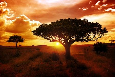 Africa Sunset Stock Photo - 17971565