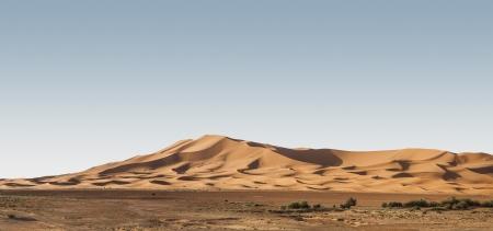 Dünen der Wüste Standard-Bild