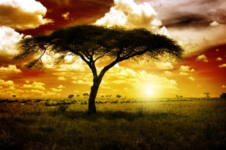 africa tree: Africa Sunset