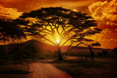 África Sunset Foto de archivo