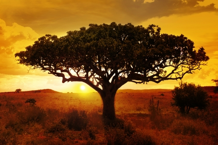 Afrika Sonnenuntergang Standard-Bild