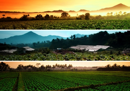 A collection of beautiful farmland landscape picture at morning Stock Photo