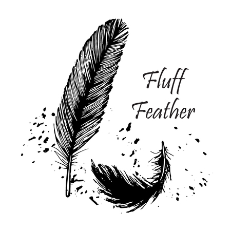 drawing, fluff, feathers, set, pattern, birds feather