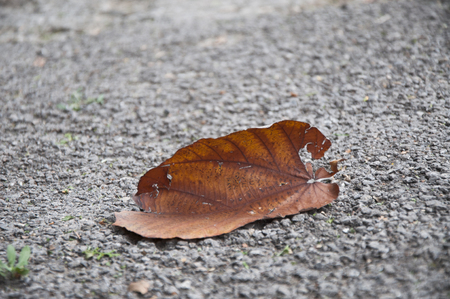 A leaf on the ground during fall season Reklamní fotografie