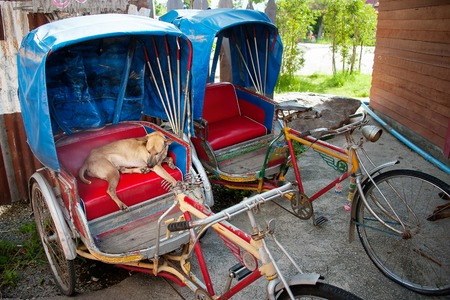 proposed: dog sleeping on the red seat in 3 wheels bike Stock Photo