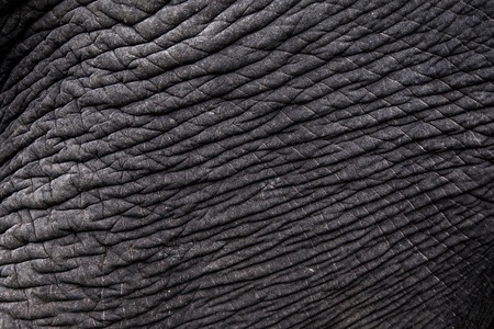 Skin texture of an elephant, close up.