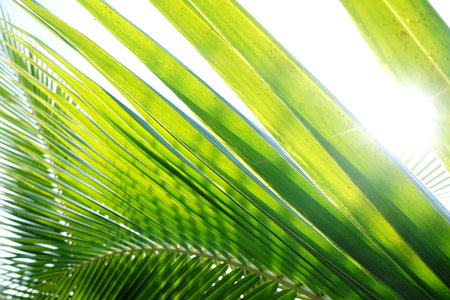 abstract pattern of coconut leaves
