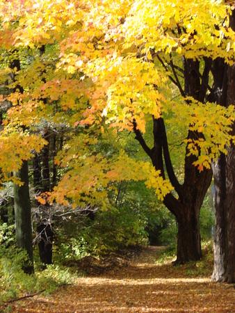 A rural road with peak foliage Archivio Fotografico