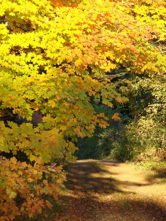A country road in autumn photo