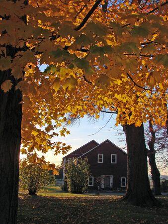 farm house: Foliage and farm house at sunset Stock Photo