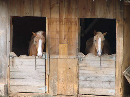 A pair of horses standing in a barn