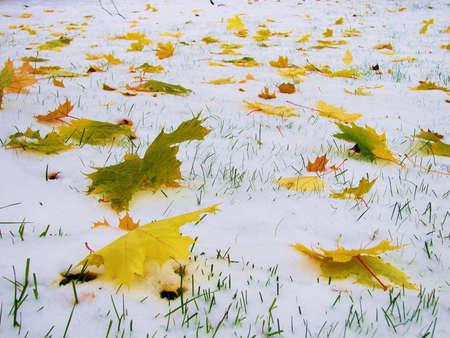 changing seasons: Changing seasons - leaves on snow