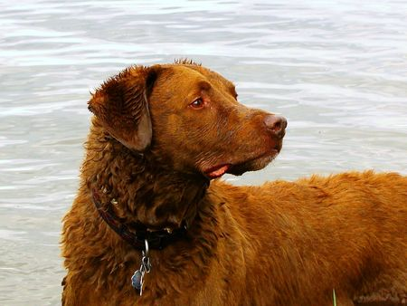 Mans' best friend after swimming on the lake