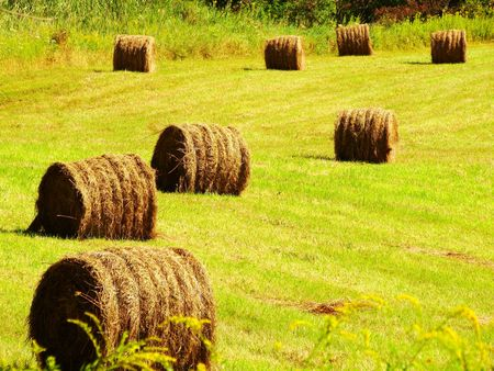 Bales of hay in a field Stock Photo - 3591307