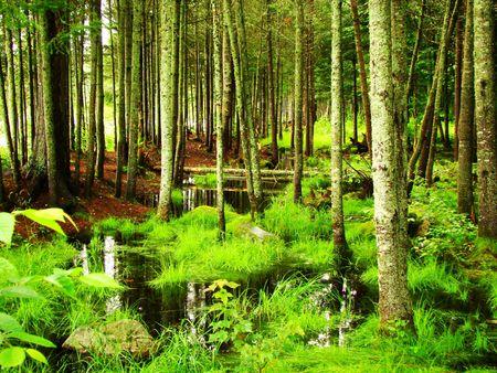 A lush wetlands area