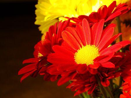 Flowers Archivio Fotografico