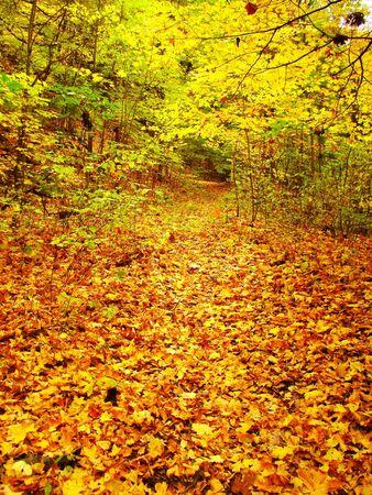 A forest trail covered in fall foliage Archivio Fotografico