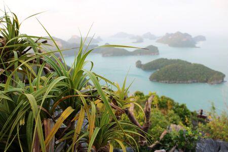 screwpine: Views of ang thong archipelago island.Thailand. Stock Photo