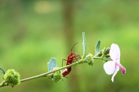 Insects and Flowers Stock Photo