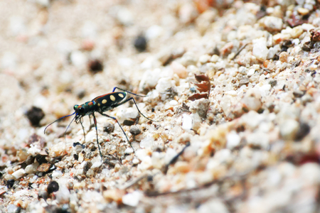 Little colorful insects on the ground sand. Stock Photo