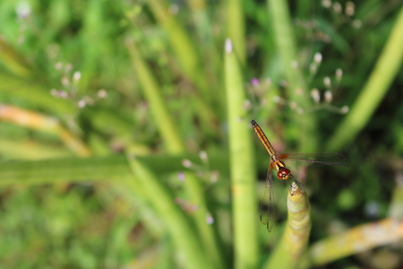 Beautiful brown dragonfly in the garden. Stock Photo