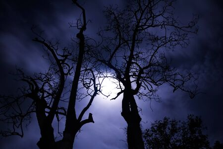 clouded sky: Trees with the moon light in the clouded sky
