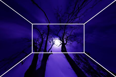 clouded sky: Trees with the moon light in the clouded sky. Stock Photo