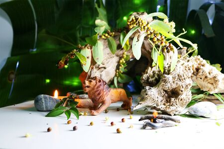 drift: The Lion model, Concept with animals model, drift wood , leaves, seeds, and candles.