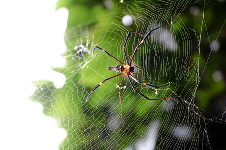 The spider with the insects in the garden.