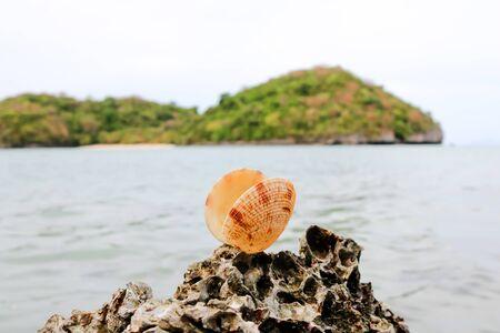 ocea: The shells on the beach.