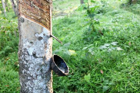 plantations: rubber plantations