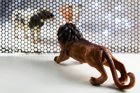 figurine: The Lion and Cow model. Concept shooting model animals through steel grating and backgrounds, including blur lens in some parts.