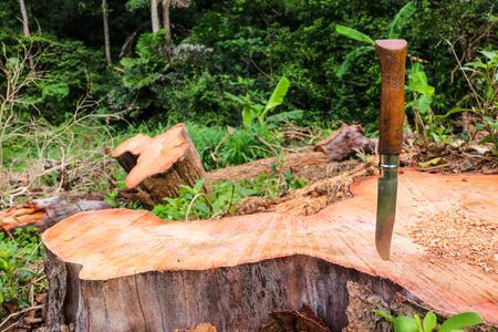 Multifunction knife stuck on the tree stump. Stock Photo