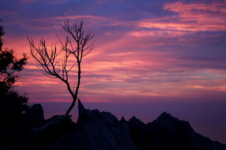 leafless: Leafless tree with purple sky on the mountain Stock Photo