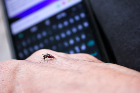 mosquitoes: Mosquitoes on the hand with telephone screen background Stock Photo