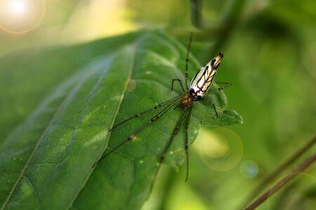 trap: Beautiful spider in the garden.